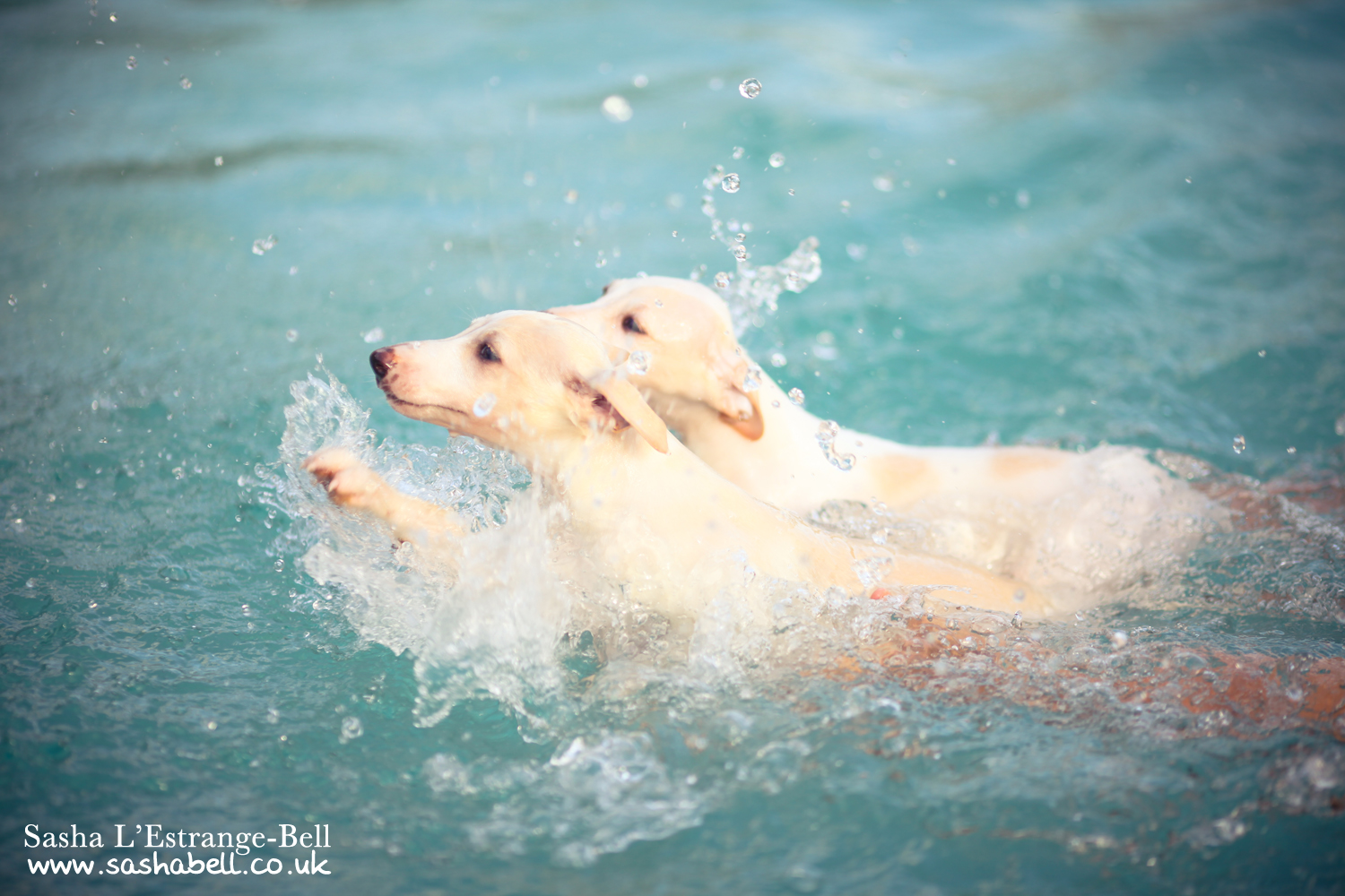 Swimming Puppies – Day 313/365