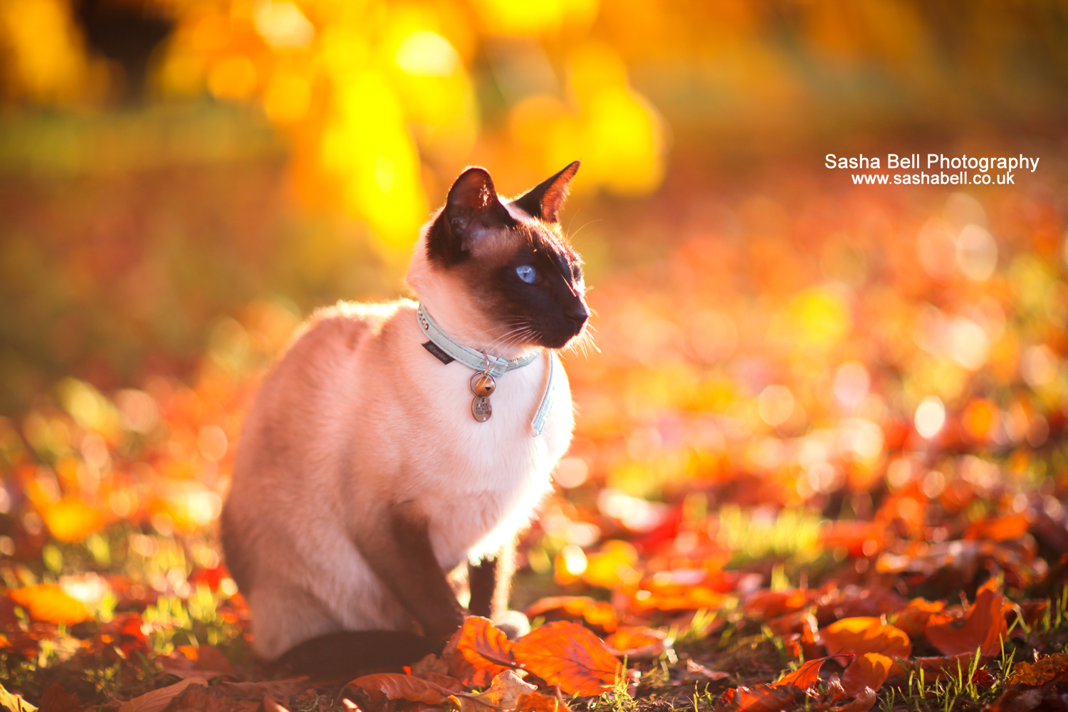 Mocha In the Autumn – Day 52/365