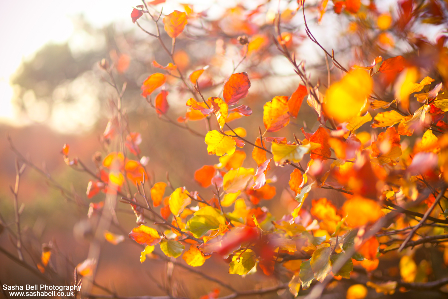 The Colour of Autumn – #25 of #50