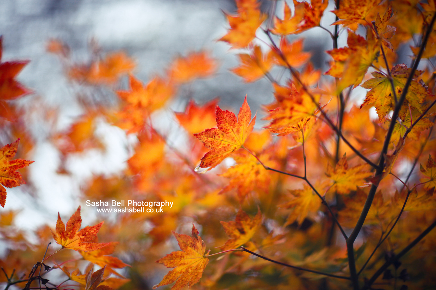 Autumn Colours – Day 35/365
