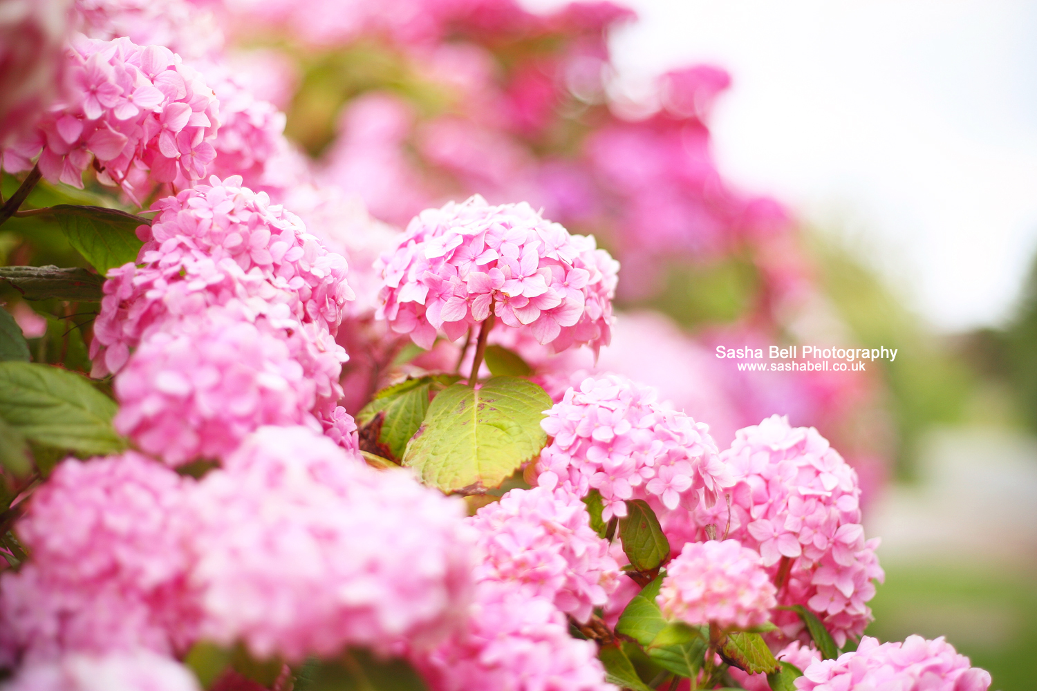 Pink and Perfect – Day 305/365