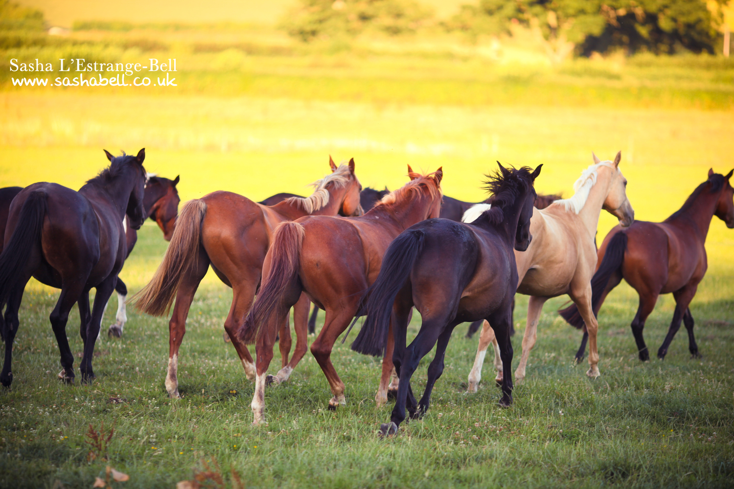 Herd of Horses – Day 303/365