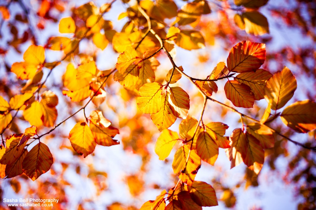 The Colour of Autumn - #16 of #50