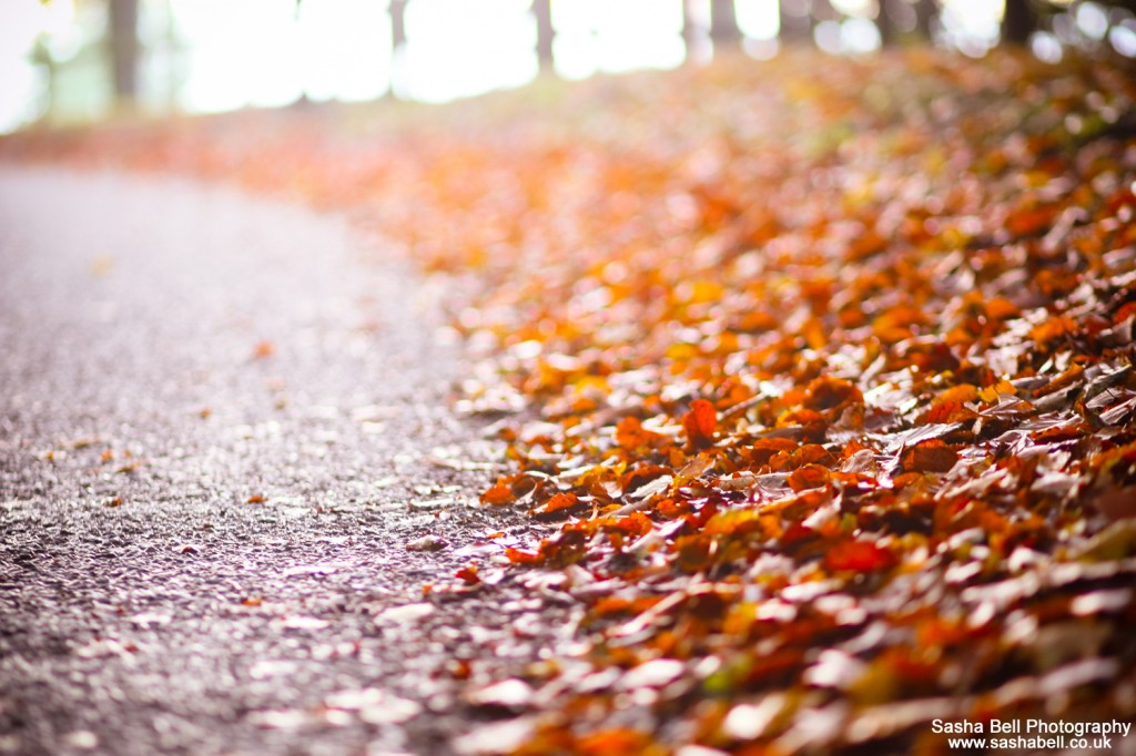 The Road to Autumn - #42 of #50
