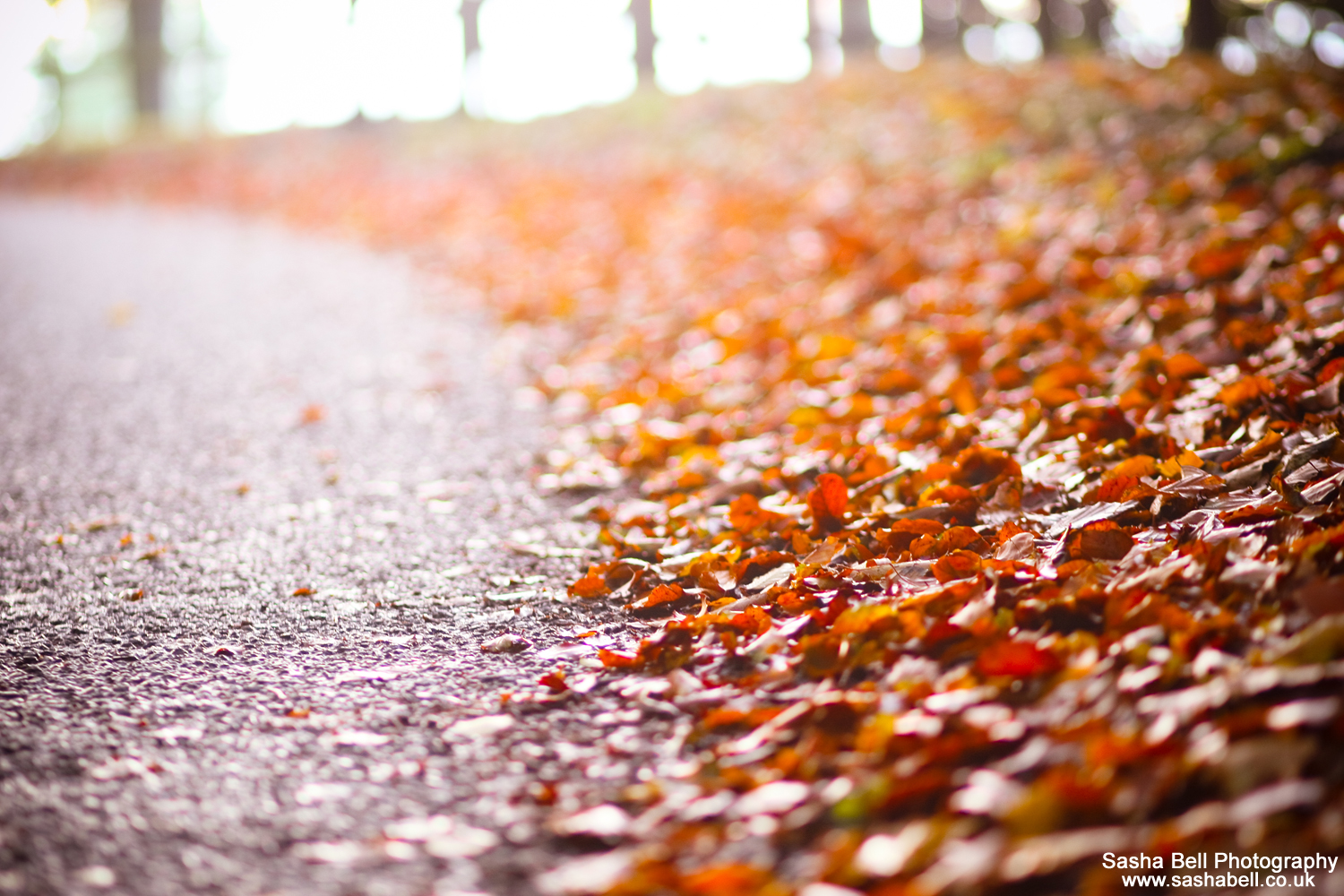 The Road to Autumn – #42 of #50
