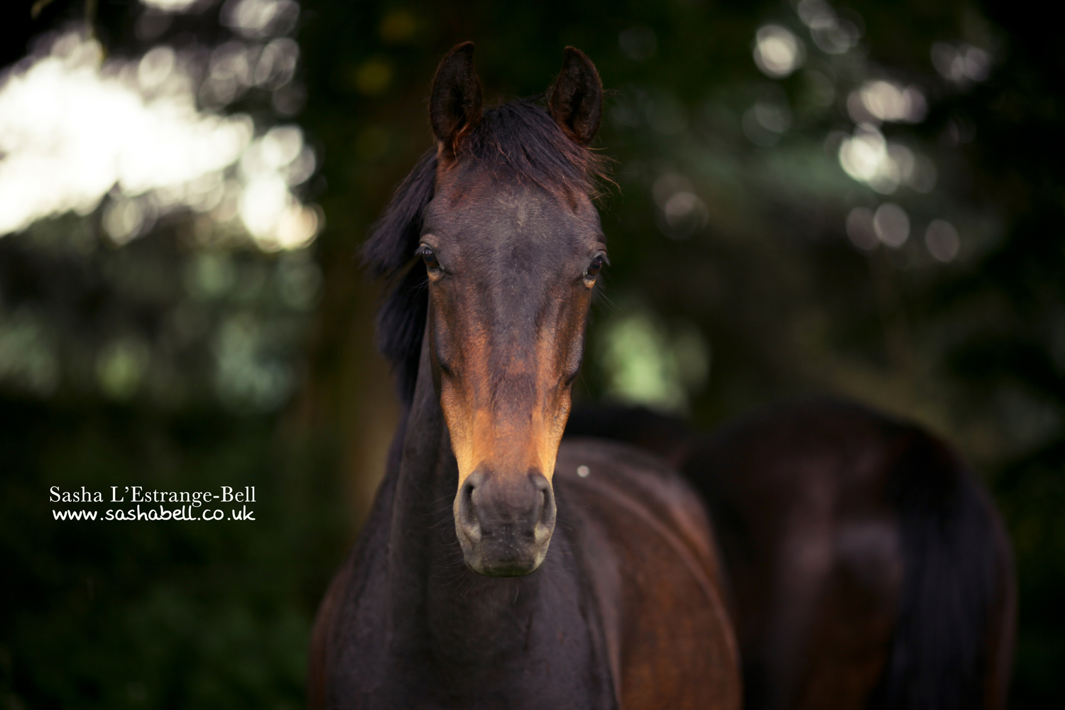 Dark Bay Horse – Day 257/365