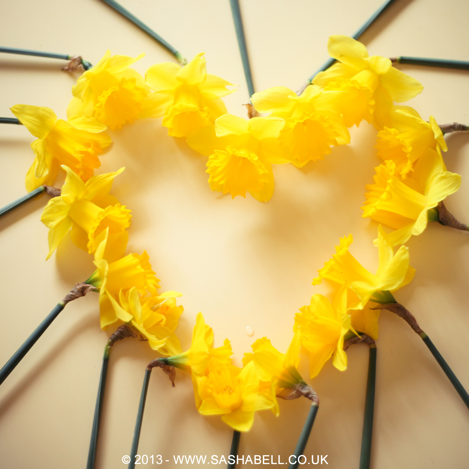 Daffodils In Heart Shape – Day 179/365