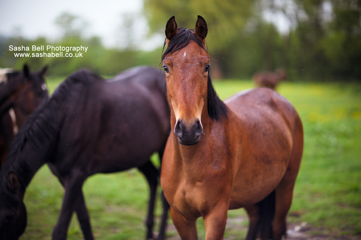 Horses In the Rain – Day 249/365