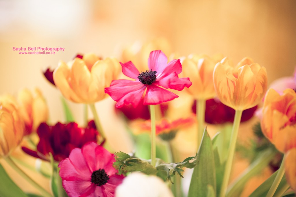 Sweet Pink Anemones - Day 149/365