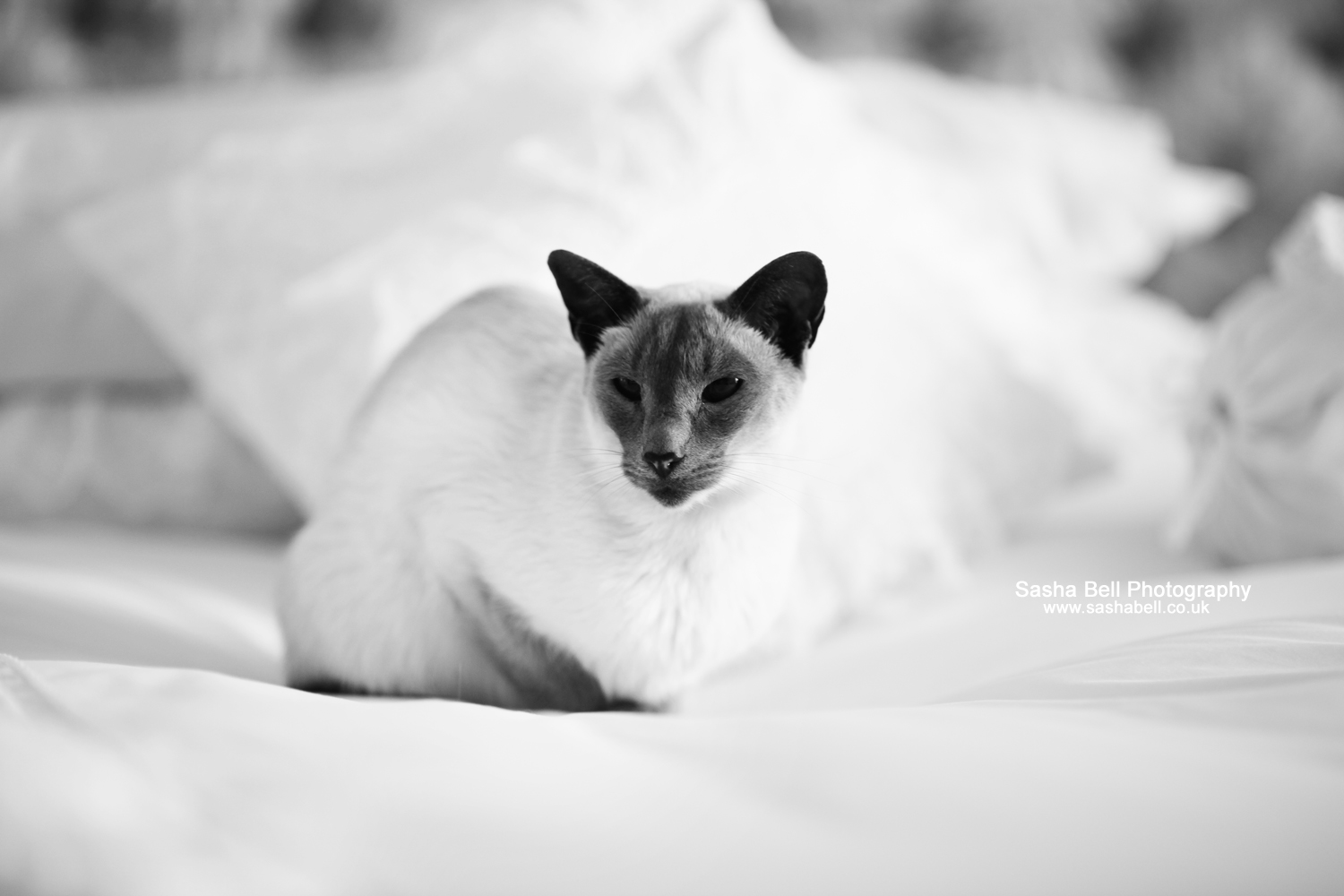 Black and White Princess – Day 272/365