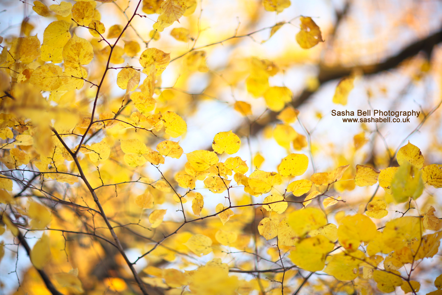 Yellow Autumn – Day 53/365