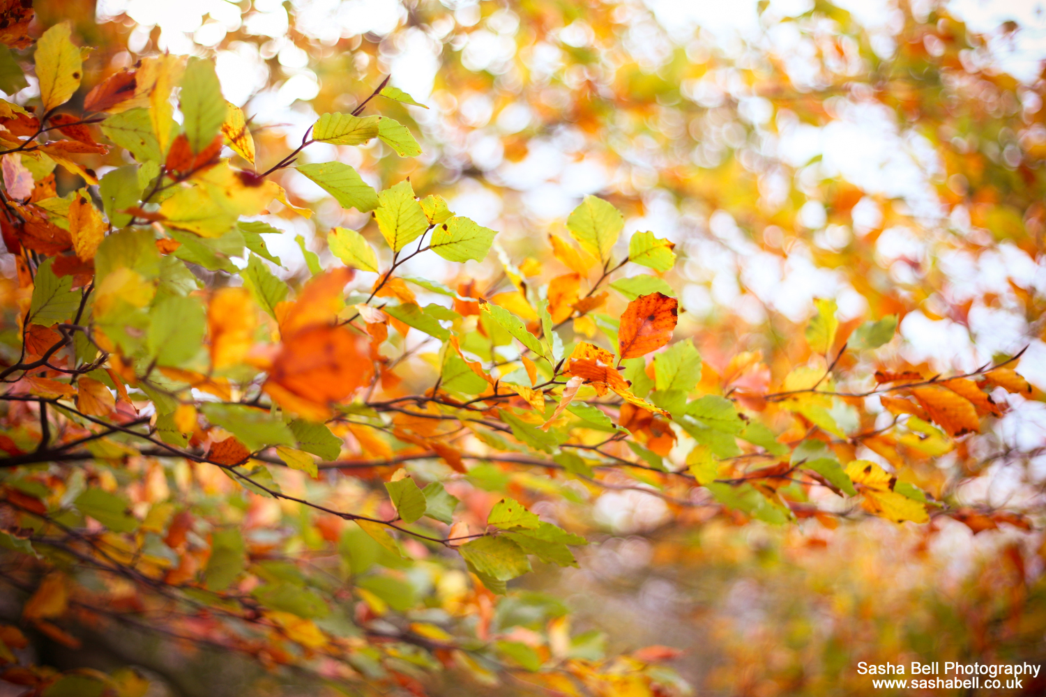"""""""Autumn is a second spring when every leaf is a flower"""" – #48 of #50"""