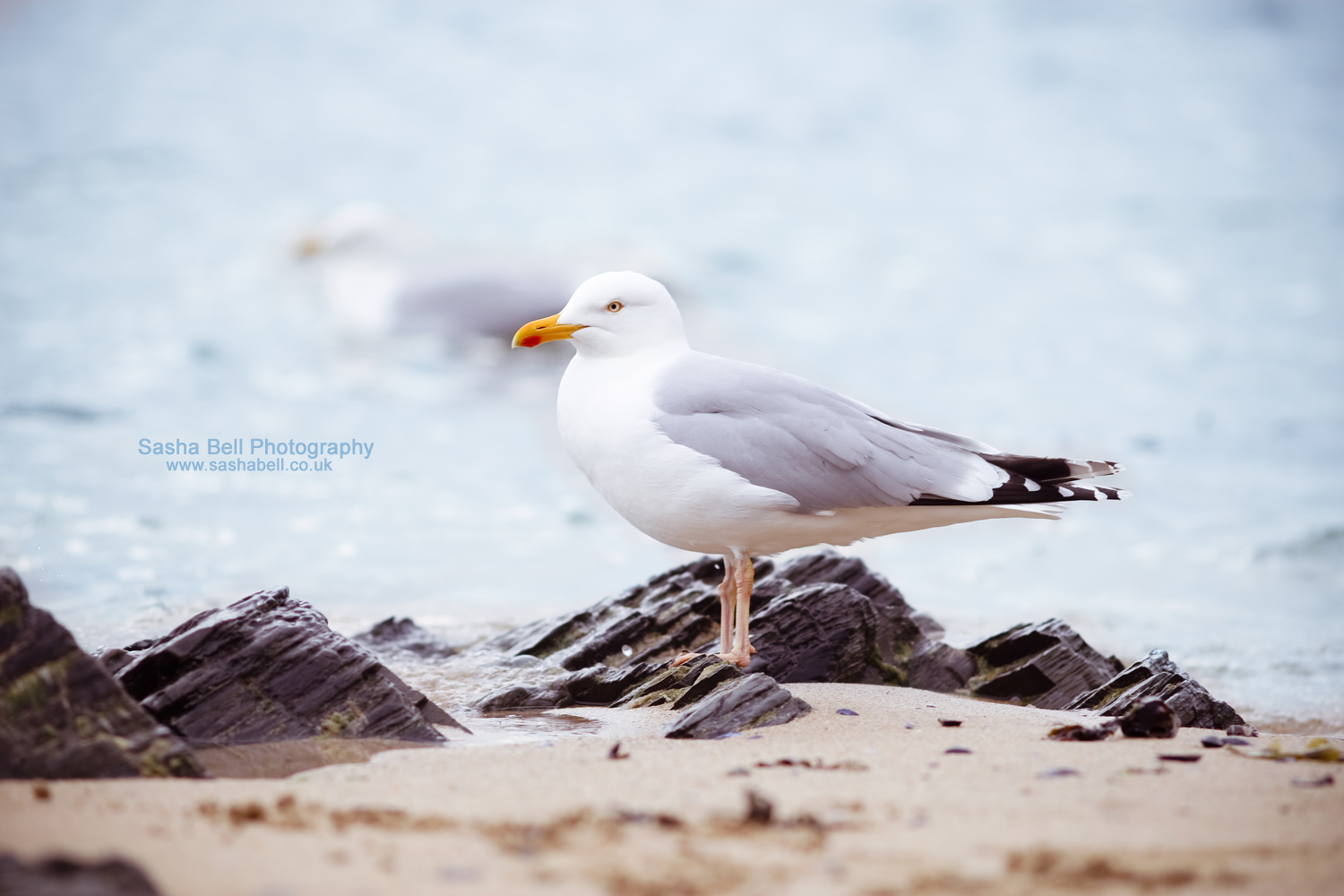 My Seagull  – Day 232/365