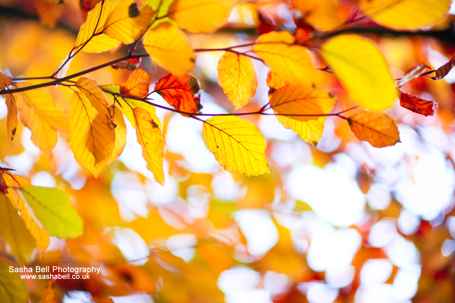 Autumn Leaves – Day 46/365