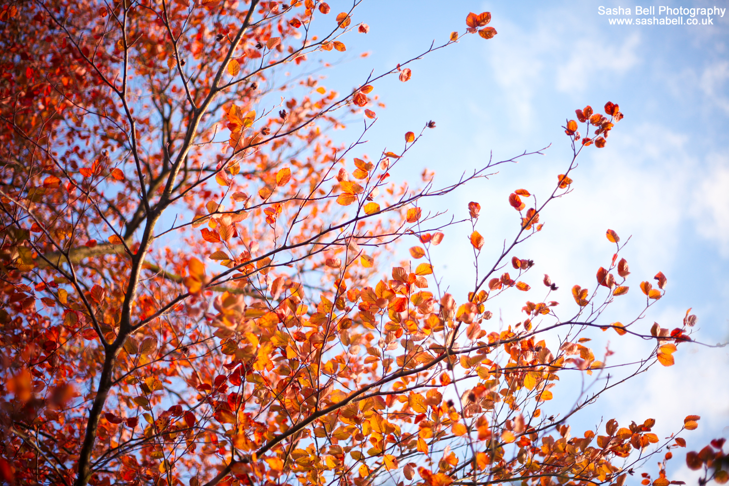 Falling for Autumn – #19 of #50