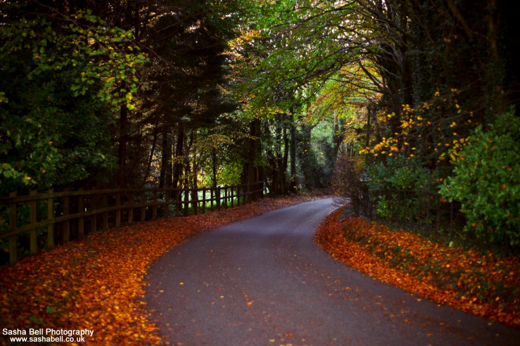 The Autumn Road - #49 of #50