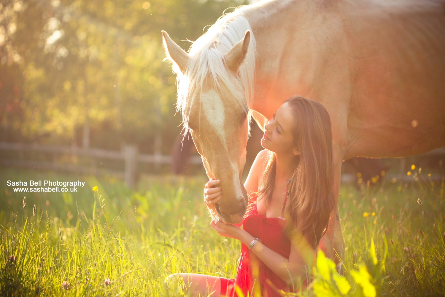 Palomino Horse with Girl