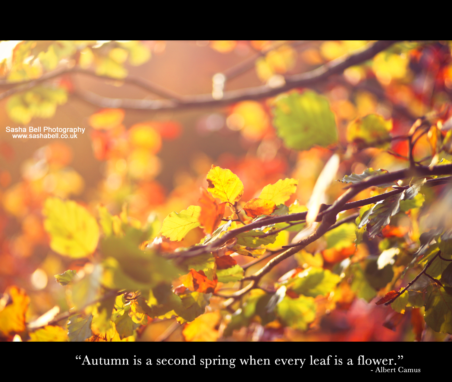 """Autumn is a second spring when every leaf is a flower"""