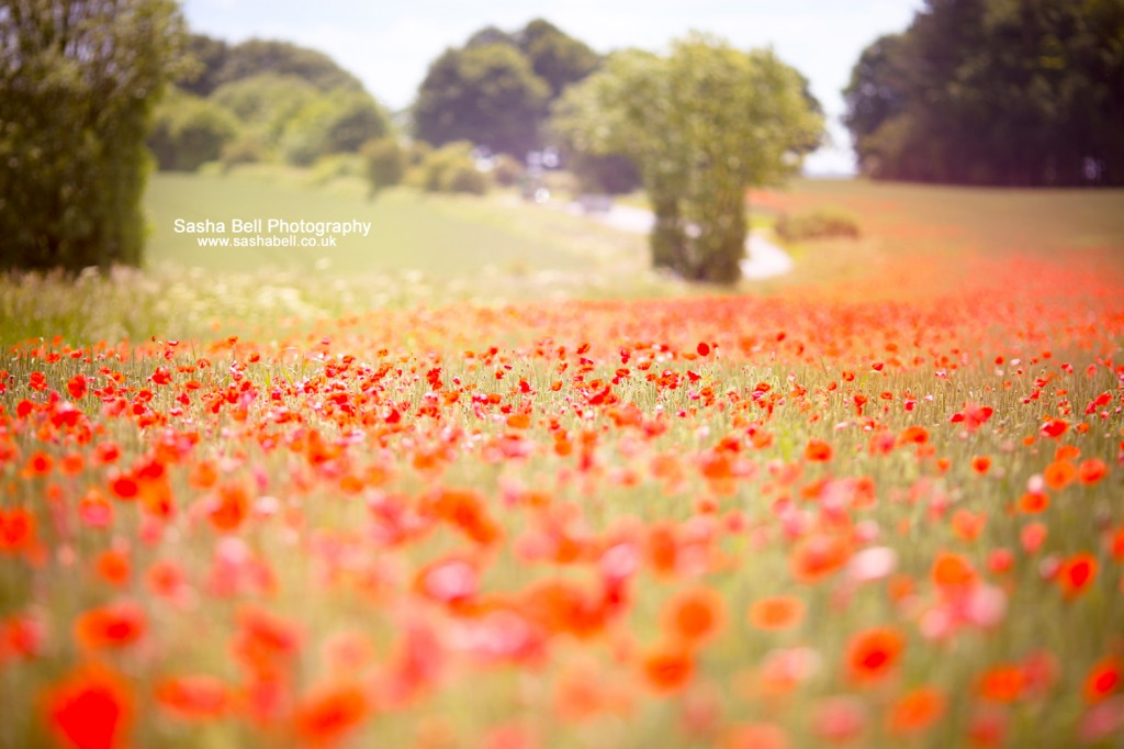 Dancing Poppies - Day 270/365