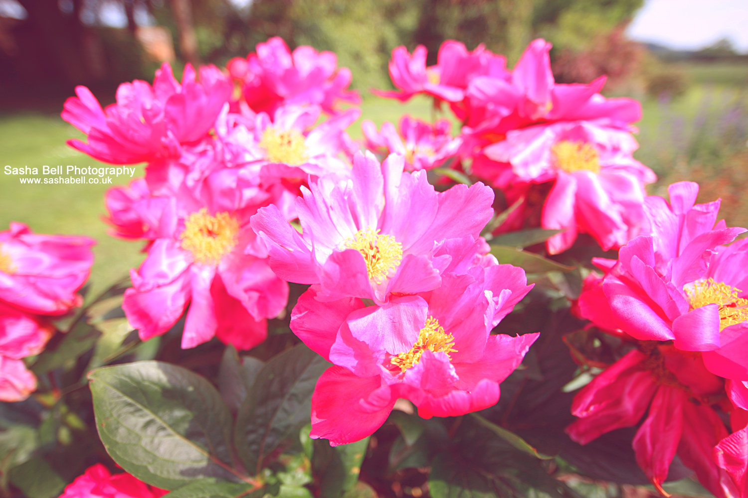 Pink Is For Summer – Day 261/365