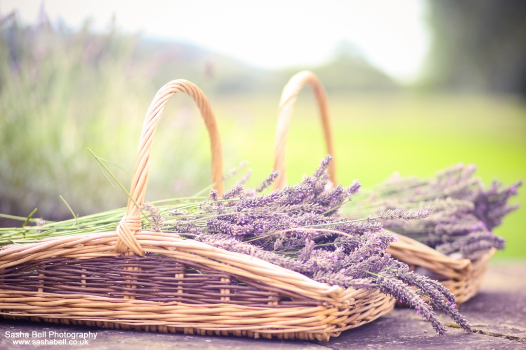 Lavender Harvest - Day 351/365