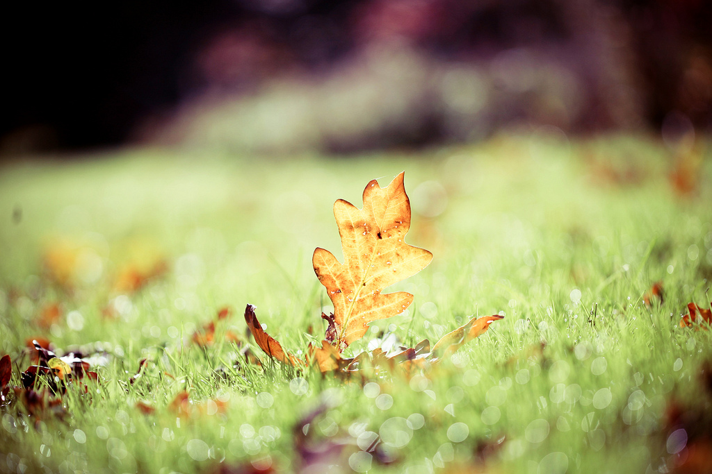 Bokeh Autumn – Day 4/7