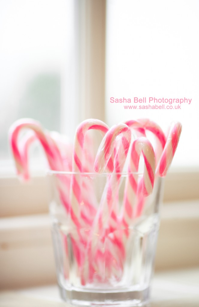 Sweet Candy Cane - Day 111/365