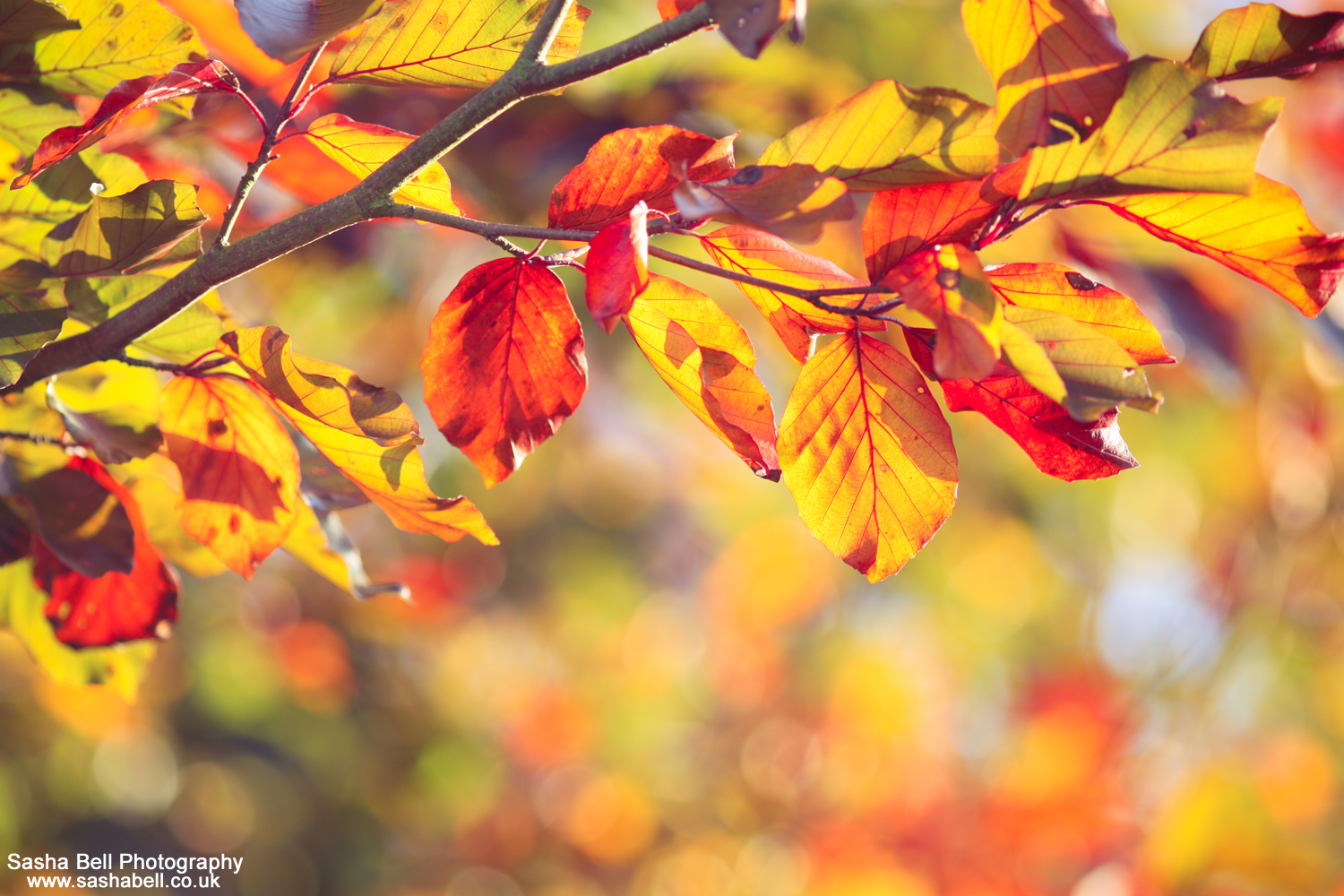 The Colours of Autumn – #47 of #50