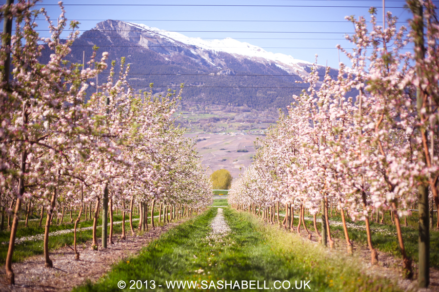 Apple Orchard – Day 214/365