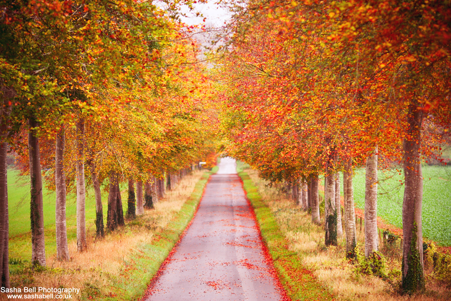 The Autumn Drive – #45 of #50