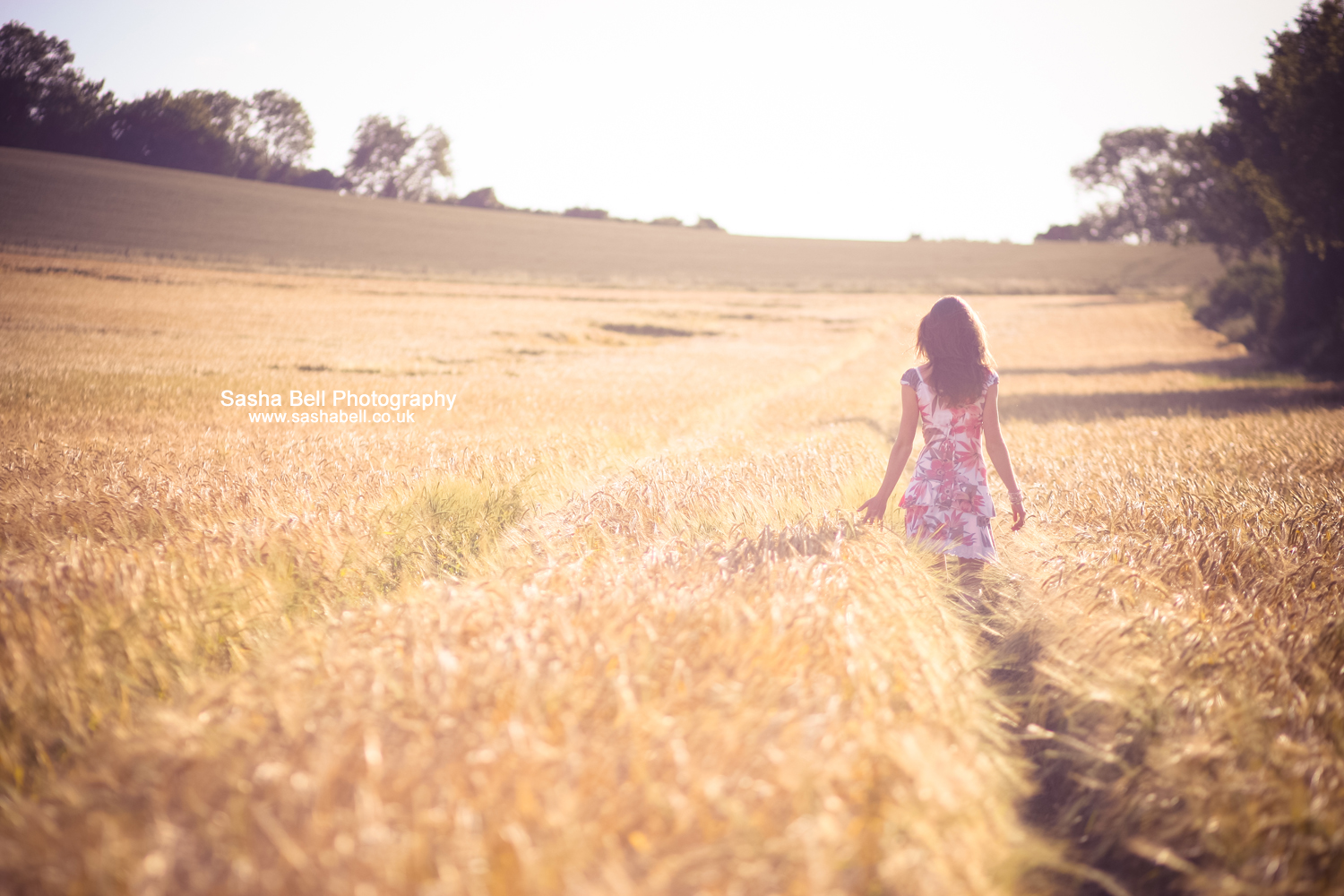 Beauty in the Barley – Day 290/365
