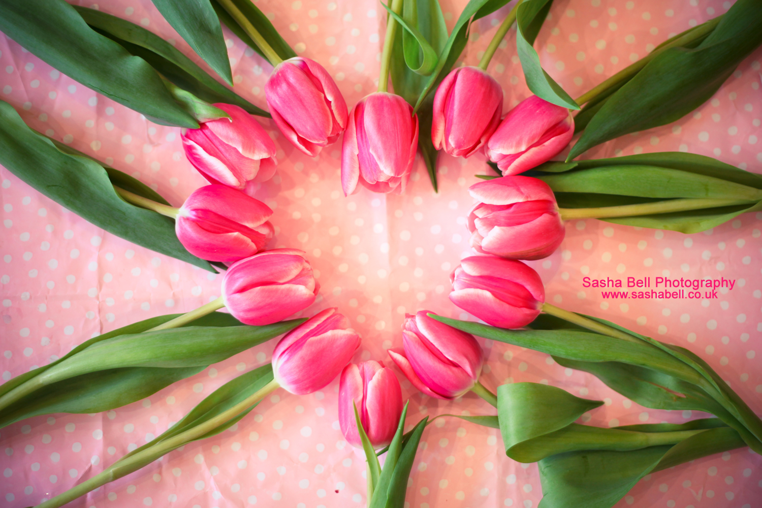 Pink Tulips in Heart Shape – Day 165/365