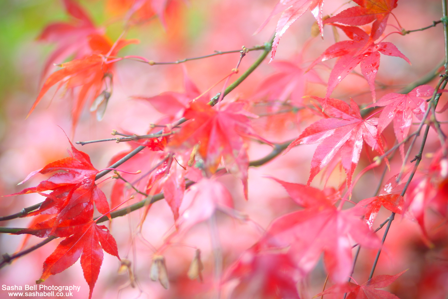 Red Autumn – #37 of #50