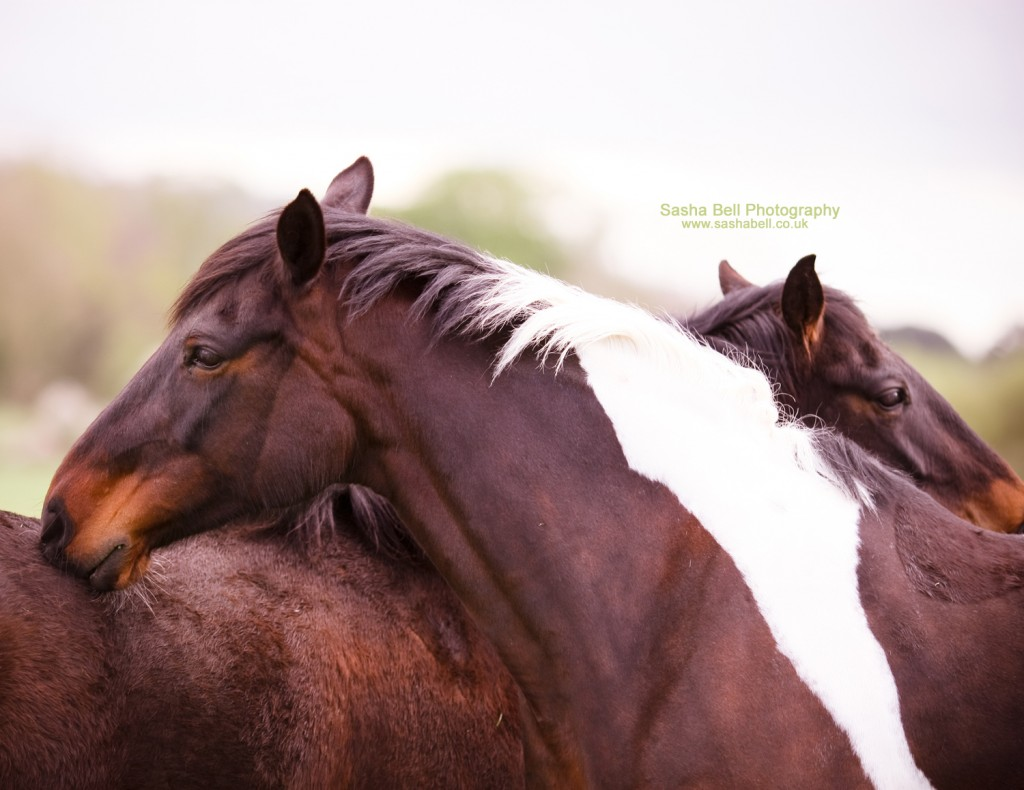 Horse Love - Day 210/365