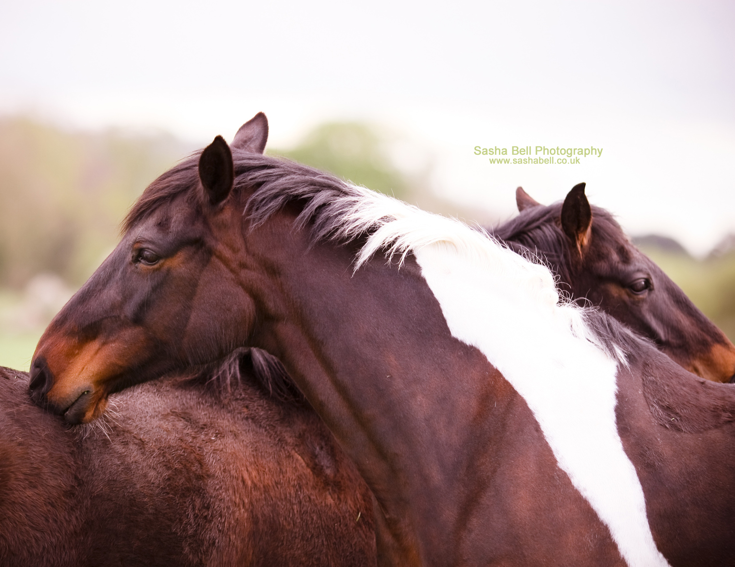 Horse Love – Day 210/365
