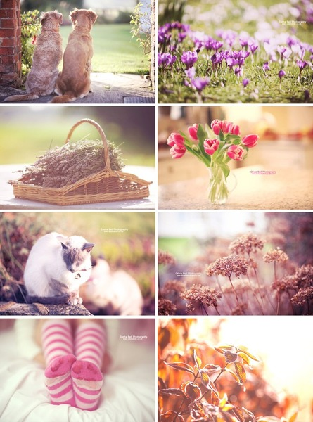 Spring and Summer Photography Photoshop Action Pack